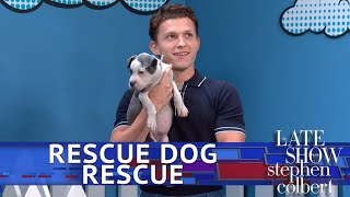 Download Rescue Dog Rescue With Tom Holland: Superhero Edition Video