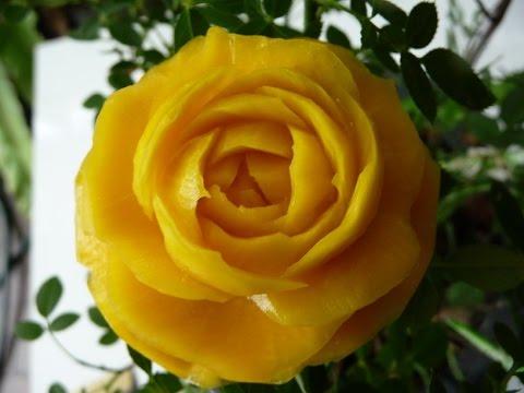 กุหลาบจากฟักทอง,How to carve pumpkin into rose patterns 1st