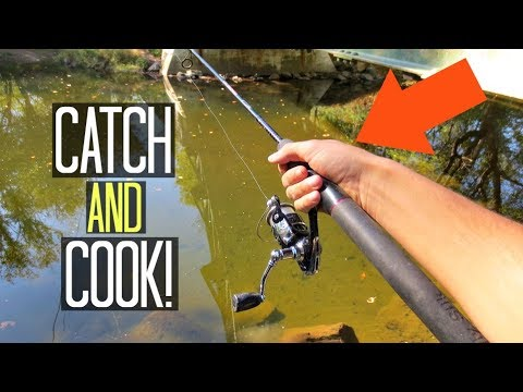 Fall Stocked Trout Fishing!! CATCH & COOK! (Delaware)