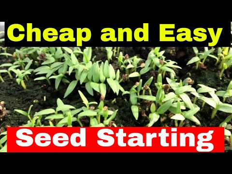 Cheap and Easy Seed Starting