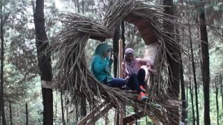 wana wisata BUKIT PINUS / HUTAN PINUS / BUKIT HIJAU Wonosalam Jombang Jatim.