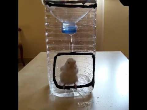 Best helpful 💡 idea for save birds in summer season 😀