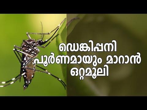 ഡെങ്കിപ്പനി പൂർണമായും മാറാൻ ഒറ്റമൂലി | Dengue Fever Ayurvedic Treatment Using Pappaya