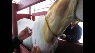 How Horses Help Make Antivenom In Mexico