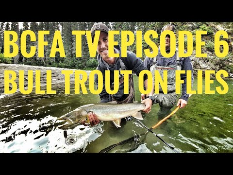 BC Fishing Addicts Episode 6 - Northern Bull Trout on the Fly