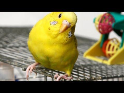 What Are Common Bird Illnesses? | Pet Bird