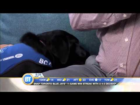How Guide Dogs are Trained: