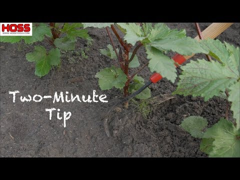 Easy In-Row Weeding Without Damaging Plants