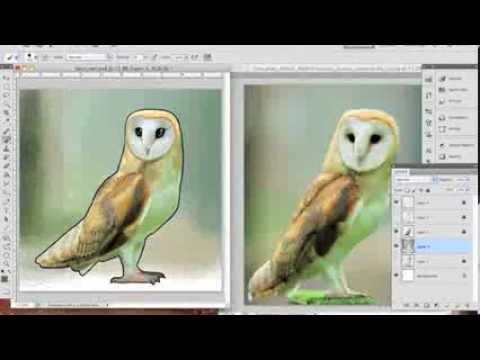 Barn Owl - time lapse