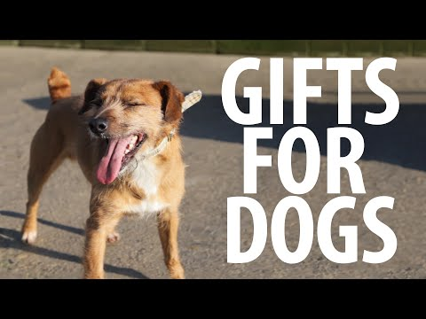 Giving Gifts to Homeless Dogs