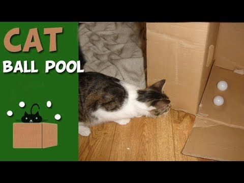 Cat Toy for Indoor Cat - Box and Ping Pong