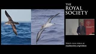 The Seabird