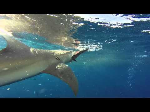 Shark Week Ralph Cup