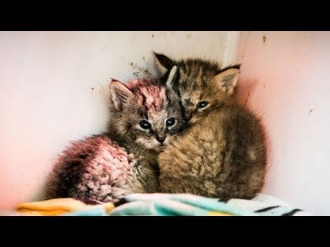When A Teen Found These Kittens By The Sid Of A Road He Didn't Realize They Weren't What They Seem