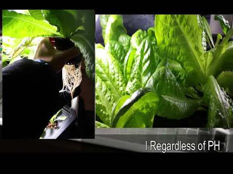 Making Your Hydroponic Grow System - Easy Steps for Beginners