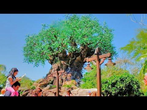 INSIDE Walt Disney World Resort - Episode 2: Updates for Disney's Animal Kingdom and Epcot