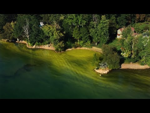 Toxic algae bloom in Skaneateles Lake