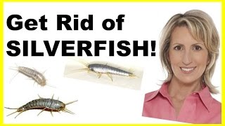 How To Get Rid Of Silverfish Naturally Easily
