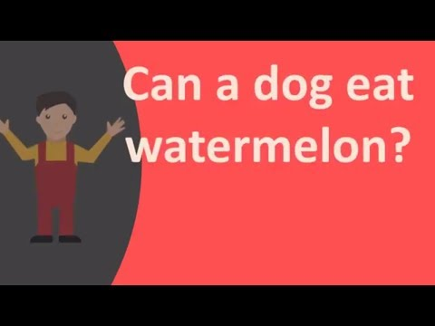 Can a dog eat watermelon ?