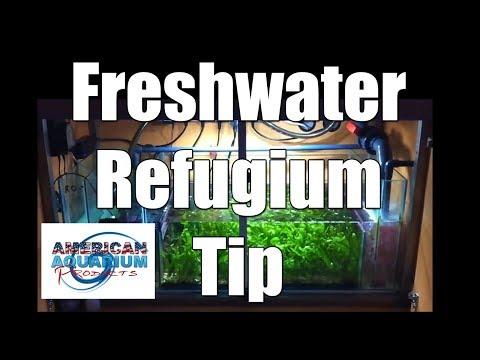 Trick- Freshwater Refugium (& really saltwater sump refugium too)