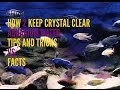 How To Keep Crystal Clear Aquarium Water   Step by Step Details   Tips & Tricks vs Myth & Facts