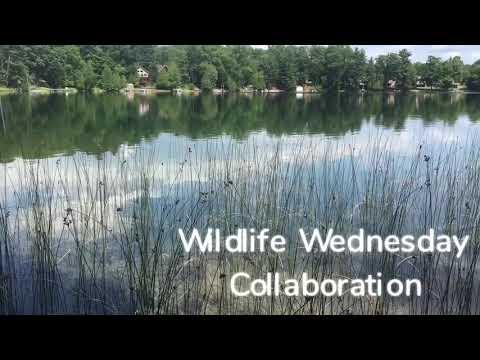 Wildlife Wednesday Collaboration -Episode 3- Wildlife in our area!