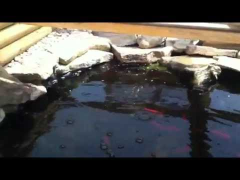 Large Outdoor Turtle Setup and Habitat