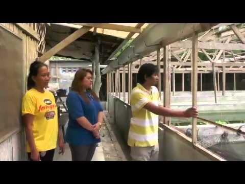 ATOVI Tilapia fish pond Research and Development Center Rosario Cahigam Batangas May 16,2015