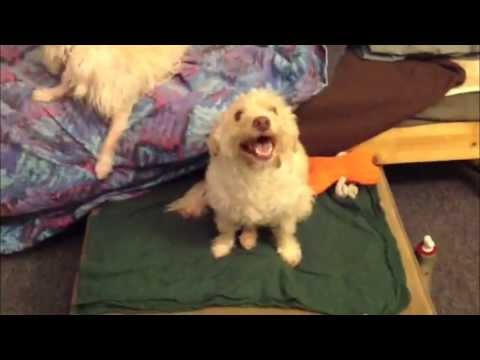 Janie The Dog With A Broken Back Says Thank You For Your Support!