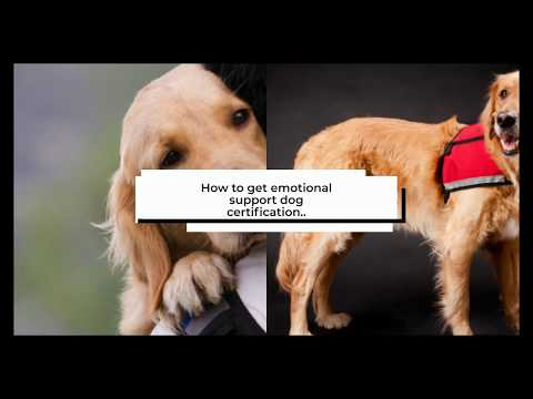 Emotional Support Dogs Registration, Requirements & Training Guide