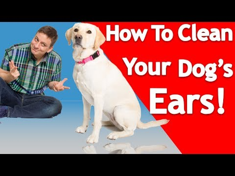 How to Clean your Dog's Ears!