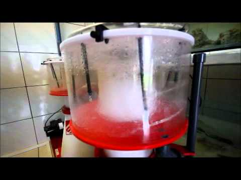 Skimmer Cleaning