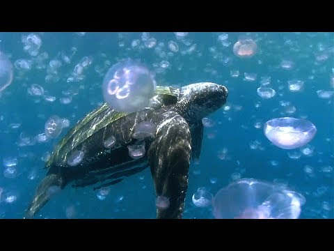 Scientists Go on a Mission to Save Sea Turtles