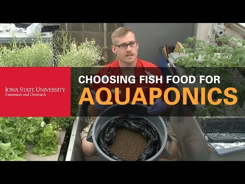 How Do You Choose What Fish Food to Buy in Aquaponics