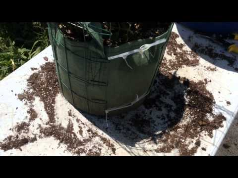 Need A Trellis For Your Already Planted Grow Bags? No Problem! Watch This!