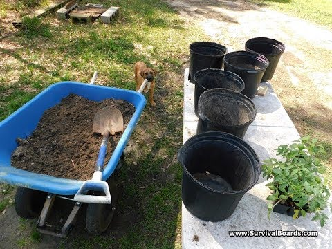 Homemade Organic Potting Soil For Tomatoes and Peppers