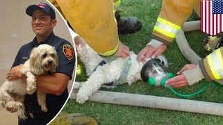Dog brought back to life: video shows firefighters rescue puppy from burning house - TomoNews