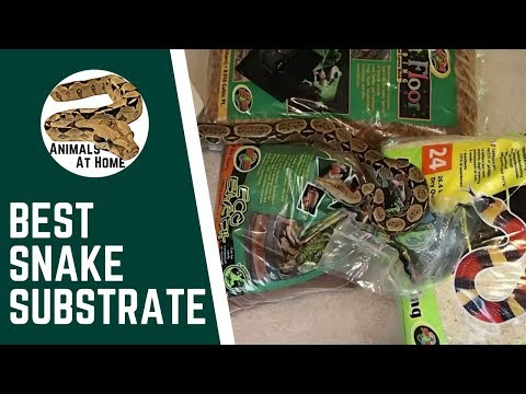 Best Snake Substrate?
