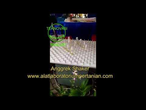 Jual Anggrek Shaker