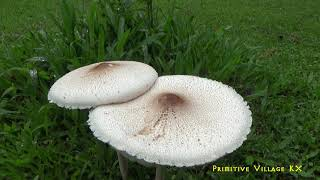 Survival Skills - The Guy Who Made Simple Jungle Chicken Trap | Delicious Roasted Chicken