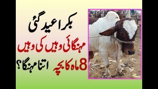 most expensive bakra in pakistan Videos - 9tube tv