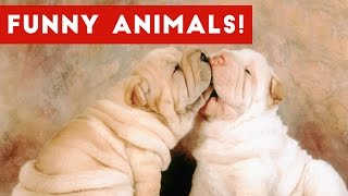 Funniest Pet Clips, Bloopers, Viral Videos & Outtakes Weekly Compilation | Funny Pet Videos