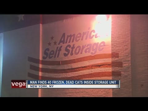 Man finds 40 frozen, dead cats inside storage unit