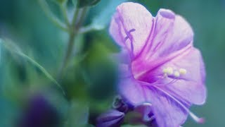 """Peaceful Music, Relaxing Music, Instrumental Music, """"Garden of Light"""" by Tim Janis"""