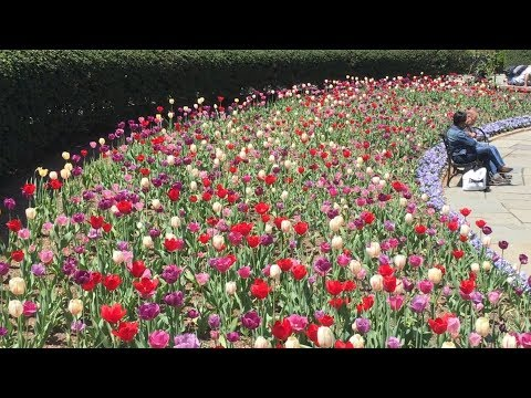 Spring Flowers At Central Park's Conservatory Garden - 2018