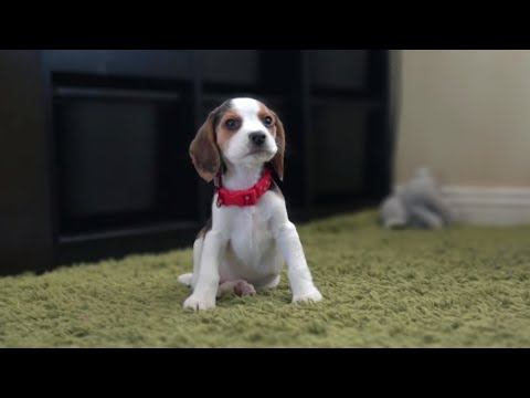 Our first month with new puppy |Cute Puppy Lilly