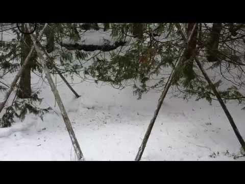 Bush Shelter...Part 1