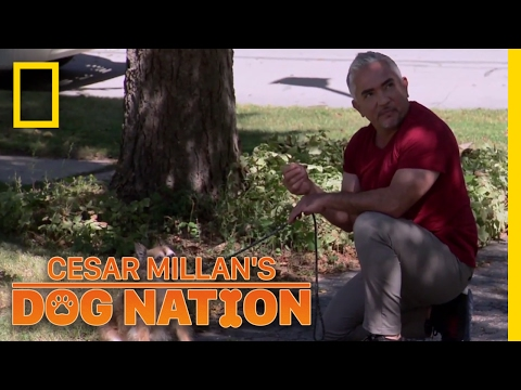 Overcoming Walking Anxiety | Cesar Millan's Dog Nation