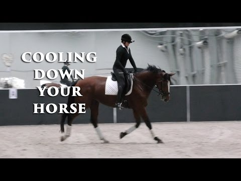 How to Cool Down Your Horse - Dressage Mastery TV Ep87