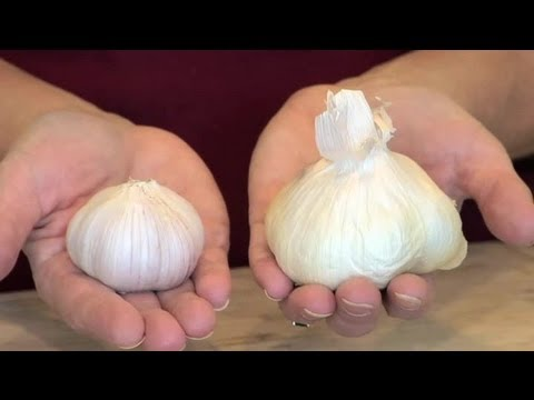 How to Offset Too Much Garlic : Understanding Taste for Better Cooking